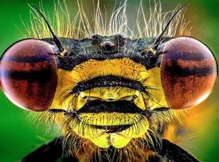 微镜头下的昆虫似恐怖怪物