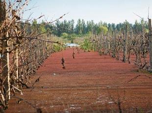 安徽一采煤农田水藻泛滥如红漆