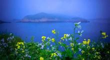 車次 海壇天神 海岸松 海島風情 海驢島 漁山島 湄洲島 馬爾地夫 東方夏威夷 左耳