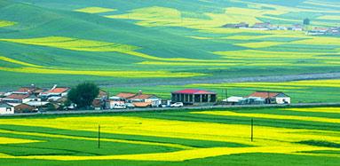 青海门源:小小园山观景台 喜看百里油菜花