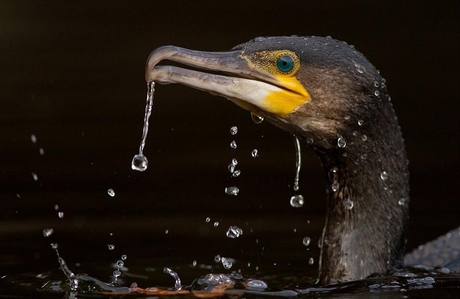 伦敦野生动物摄影展优秀作品欣赏