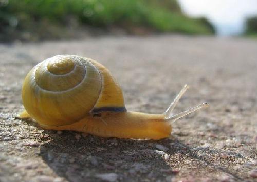 中国发现世界最小兔子蜗牛魂十陆生一速图片