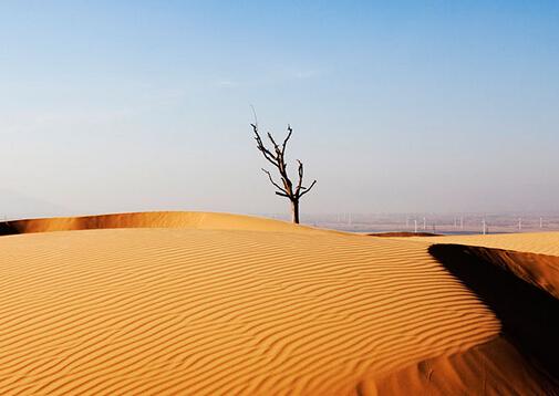 """阿联酋:可降解微珠或实现""""沙漠变良田""""_ 视频中国"""