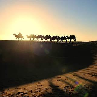 额济纳八道桥沙漠驼影[组图]