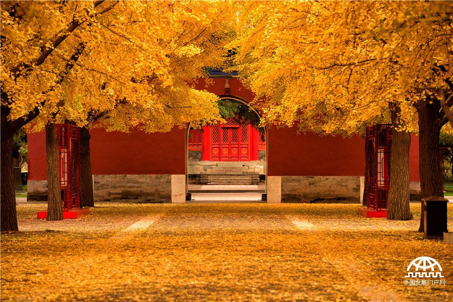 """""""秋天,这北国的秋天,若留得住的话,我愿把寿命的三分之二折去,换得一个三分之一的零头……""""大作家郁达夫一篇《故都的秋》,勾起了多少人对于北京秋天的热切向往。光阴荏苒,时过境迁,北国的秋却依然来得清,来得静,难得的湛蓝天空和纸墨书香间的美丽秋色让人陶醉。一到秋天,北京,便成了北平…… (中国科学院大学 崔垒摄影)"""