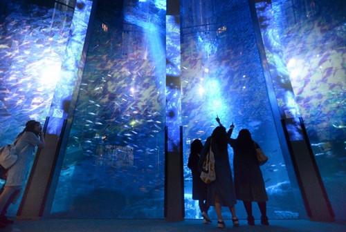超梦幻:日本打造海底冰雪世界多彩光影炫目(图)