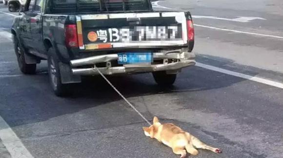 深圳货车司机把小狗绑在车尾拖死