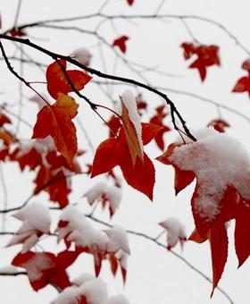 雪后初霁 济南再现老舍笔下《济南的冬天》之美