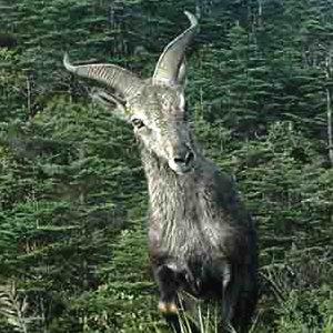 野性鞍子河:红外相机下的野生动物