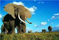 非洲象调查报告:游客骑乘大象呈蔓延趋势