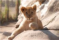 众名人支持:揭露狮子园背后的残忍