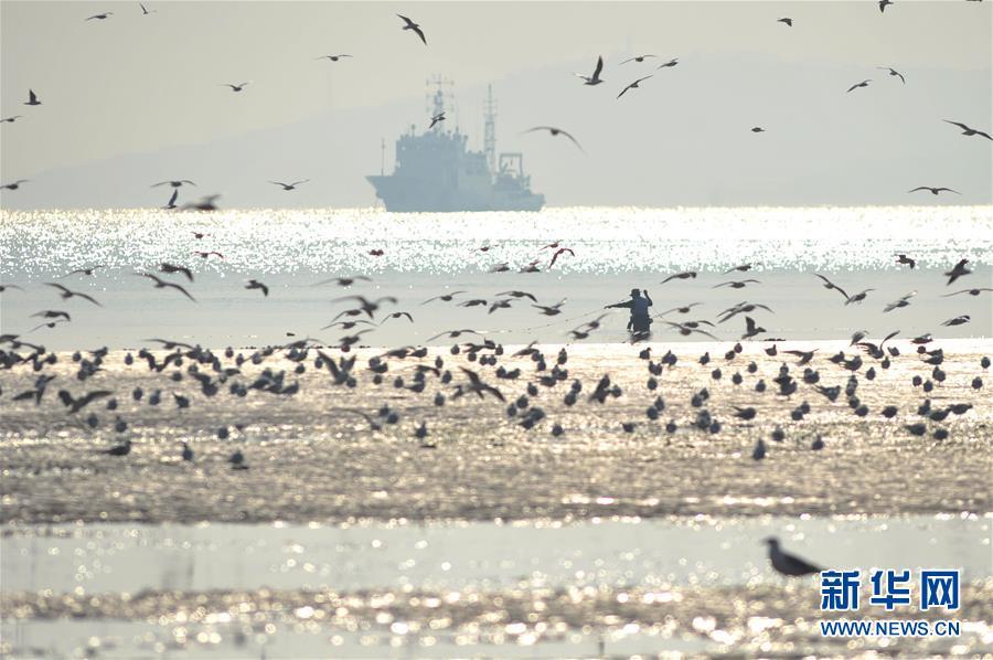 青岛栈桥遇天文大潮 海滩变身红嘴鸥乐园[组图] - 激情久久 - 激情久久