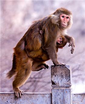 '猴年马月'将至 各山头'悟空'卖萌比美