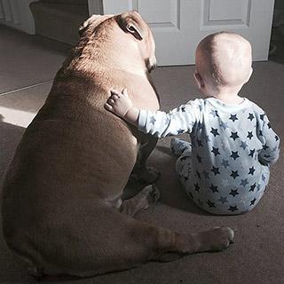 英男童与狗狗形影不离亲似兄弟