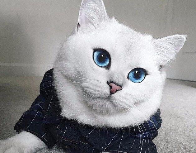 猫咪视频_\