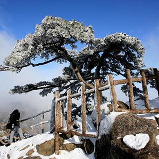安徽:阳春二月雪落黄山 玉树琼枝美景如画