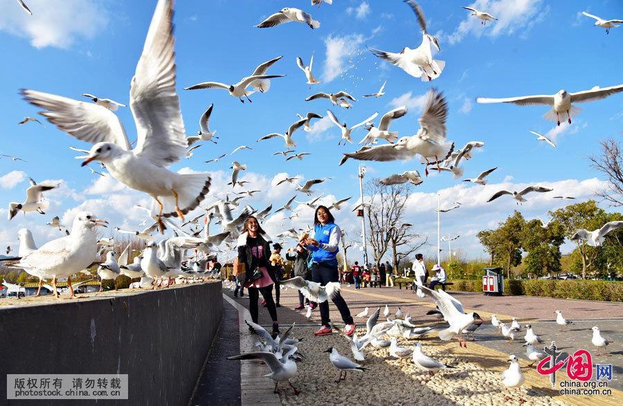 3月1日,云南昆明气温回升明显,众多市民游客来到昆明海埂大坝赏鸥喂鸥,人鸥共享和谐时光。中国网图片库 李明摄
