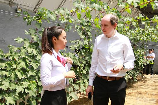 Tim Briercliffe, Secretary-General of AIPH, is listening to a guide interpreter to introduce the knowledge of grapes.