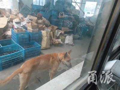 浙江一村民给牧羊犬洗澡 被狗咬掉手指吞进肚子