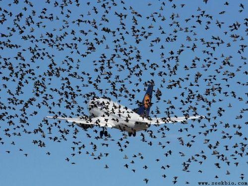 飞机撞鸟有新突破 世界性难题终于得到缓解[4