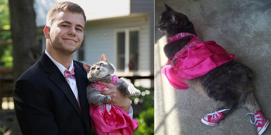 美国单身男带猫咪出席舞会 深情眼神被赞超有爱[组图]