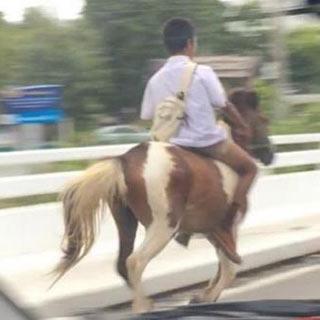 泰国男生马路骑马上学 网友称太拉风[组图]