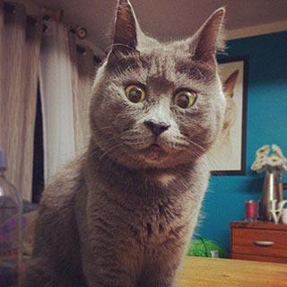 """呆萌""""惊讶猫""""走红网络 因脑积水导致失明[组图]"""