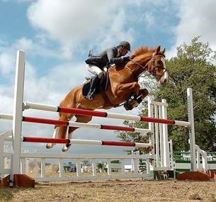 瑞士国际马术节:德国骑手夺冠