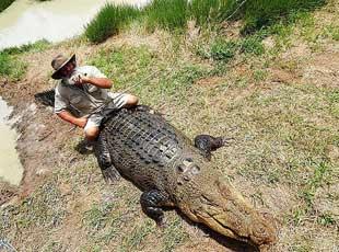 震惊!澳大利亚老人身骑1000公斤鳄鱼玩耍