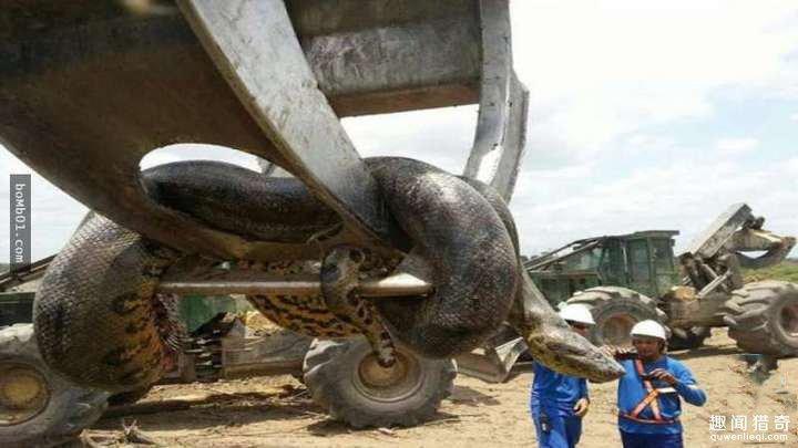 吓死宝宝了_水库炸出1吨巨蟒_不是说好动物不成精的吗