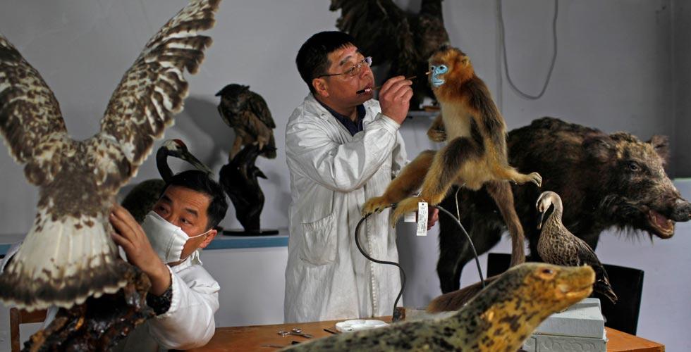 大国工匠之动物标本剥制师