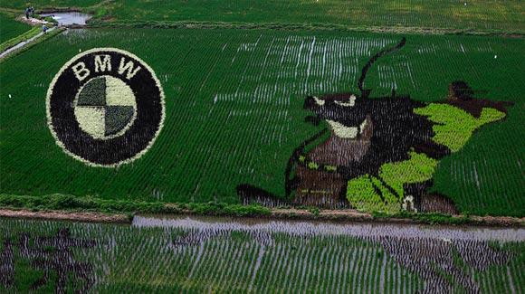 沈阳稻梦空间17幅巨型3D稻田画 占地200余亩