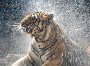 """济南动物园""""花式""""为动物消暑"""