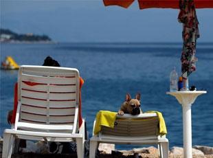 克罗地亚开设专为宠物狗酒吧 提供狗啤酒及小吃