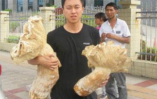 云南村民发现巨型口蘑 极为罕见可以食用