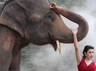 2016泰国小姐与大象合影