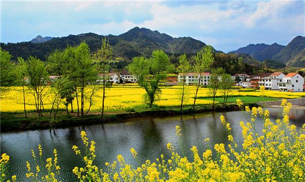 汉中油菜花海:百万青山绿水 浮光跃金