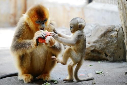 上海动物园:喷淋,冰块加瓜果 动物消夏享受多