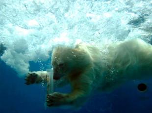 """山东海洋极地世界动物避暑有""""凉""""方"""