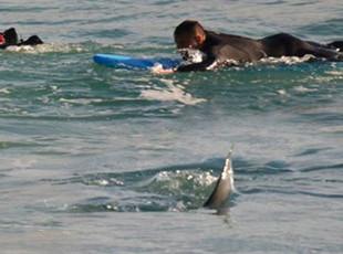冲浪者手脚并用划水逃离近在咫尺鲨鱼
