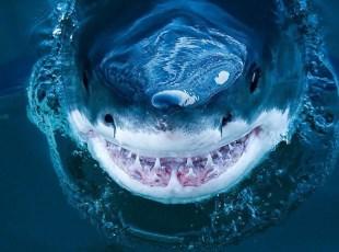 近拍鲨鱼罕见照 血盆大口的惊悚微笑
