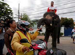 泰国大象用鼻子发传单 为新宪法公投造势