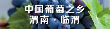 临渭葡萄的发展与成熟