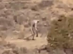 葡萄牙沙漠现神秘人型生物 类似大脚怪