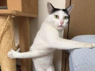 """7岁小猫因""""双臂""""交叉成网红"""