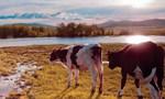 内蒙古大草原:草原重现出绿色生机