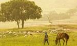 锡林郭勒——体味纯正的草原牧民生活!