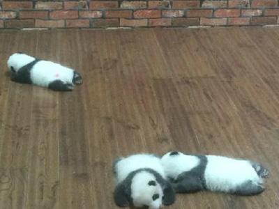 """""""葛优瘫""""之后又出现了""""熊猫瘫"""""""