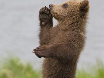 """小熊""""跳舞""""憨态可掬 招人爱"""