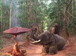 泰国一灵性大象跪拜苦行僧